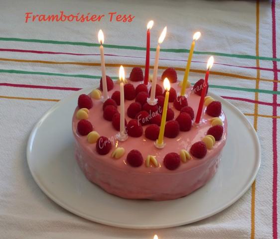 Framboisier Tess P1030478